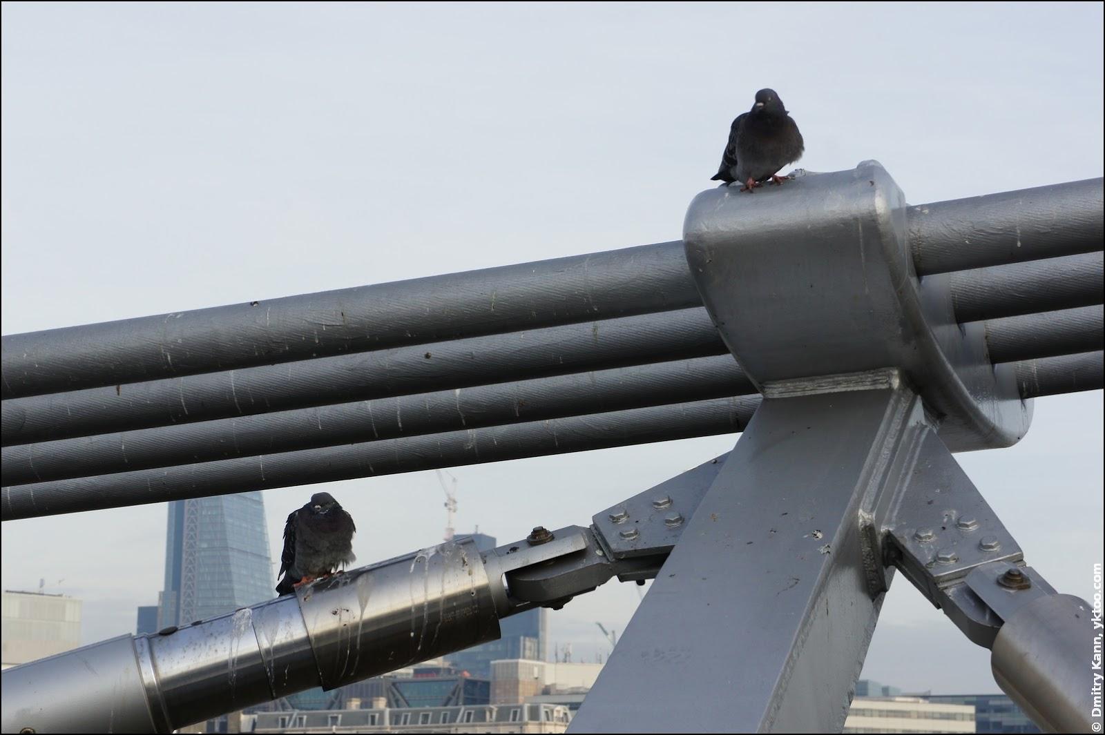 Мост Милленниум и голуби.