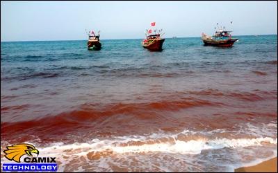 Công ty lắp đặt hệ thống xử lý nước thải thủy hải sản - Thủy triều đỏ khiến cá chết hàng loạt ở Thanh Hóa