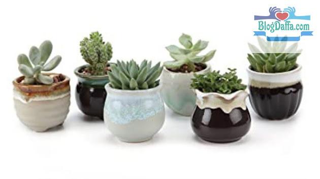 Bentuk pot kaktus harus Ideal dengan Tanaman kaktus