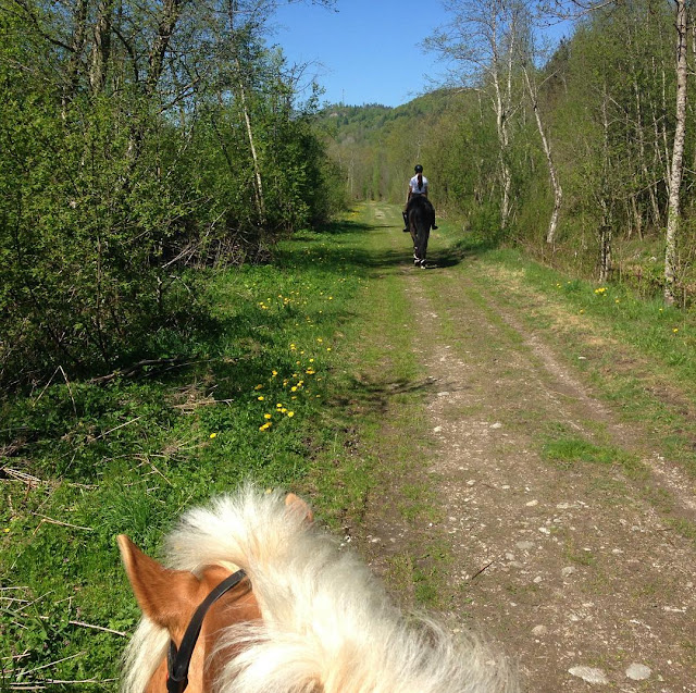 Does your horse have a best friend?