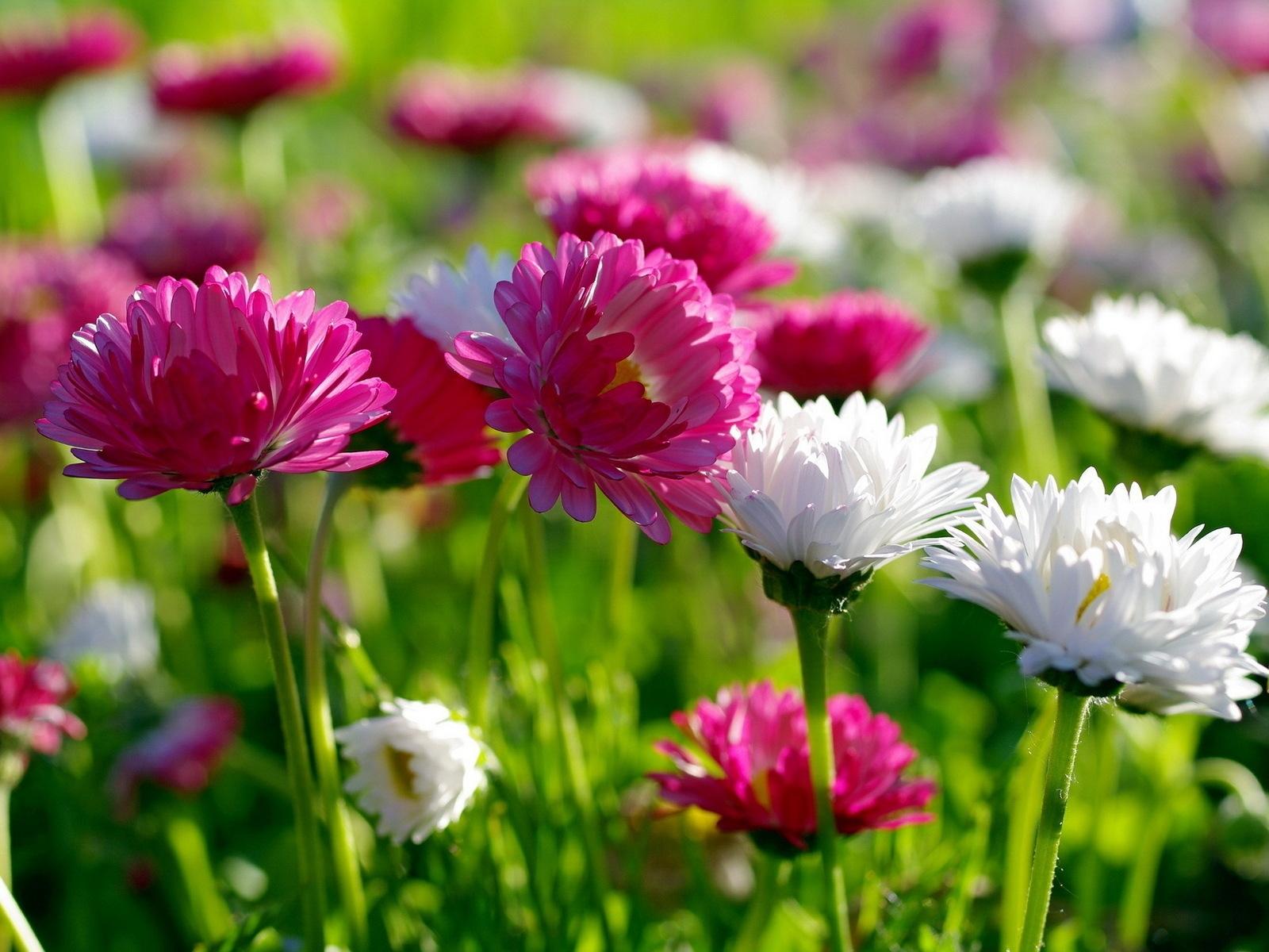 BANCO DE IMÁGENES: 12 fotos de flores preciosas en varios