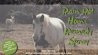 Herbal recipe for rain rot in horses and dogs