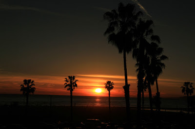Santa Monica Palm Tree Sunset - Photo by Mademoiselle Mermaid