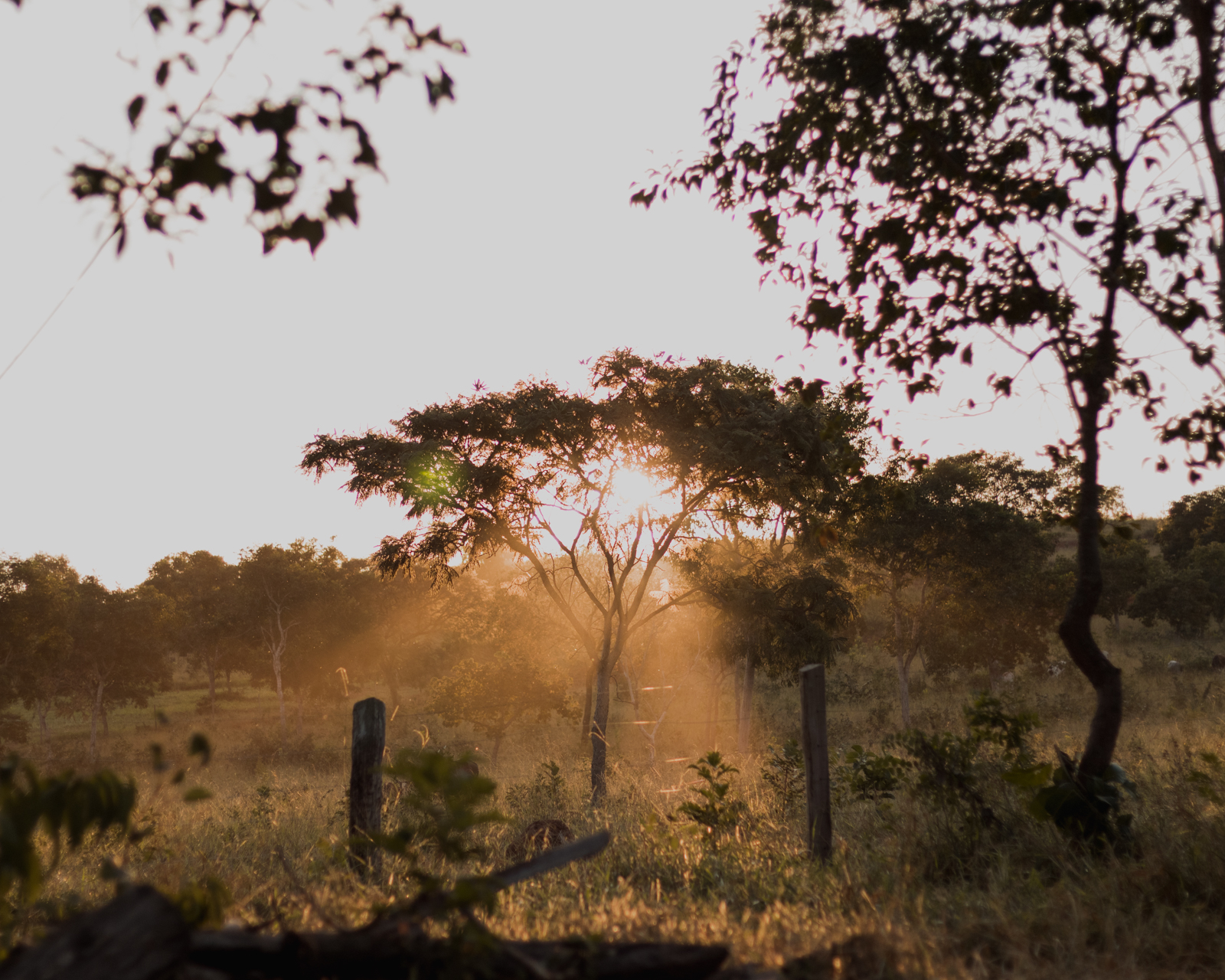 luz por do sol entre árvores
