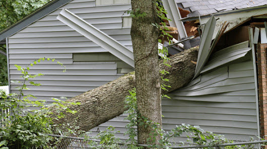 Tree Preparation for Storms and Hazardous Weather
