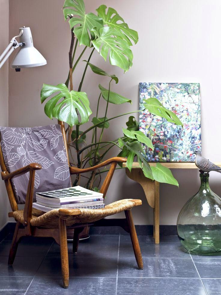 la fabrique d co plantes g antes dans la maison une jungle d 39 int rieur. Black Bedroom Furniture Sets. Home Design Ideas