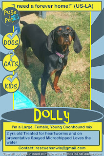 Adoption flyer for Dolly  from Pose-a-Pet