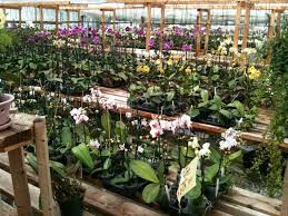 Asia's third largest Orchidarium Tipi