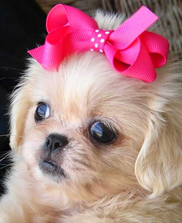 Top 5 'Small Breed' Dogs
