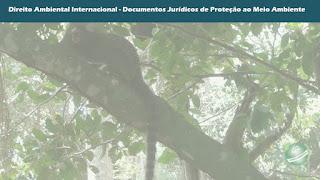 Normas de Proteção da Biodiversidade no Direito Internacional Ambiental