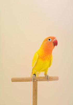 LOVEBIRD#5, BY LUKE STEPHENSON