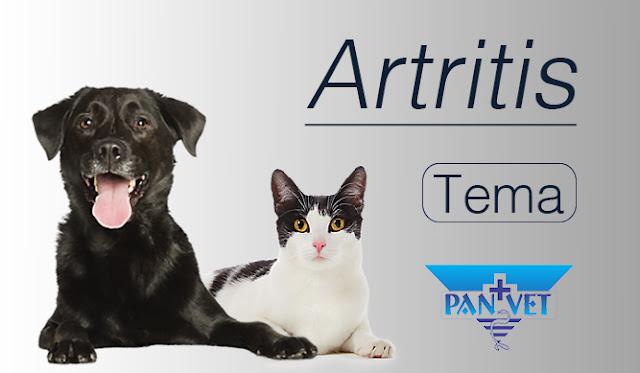 Artritis kod pasa, mačaka i konja