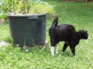 Cara Menghilangkan Bau Urine Kucing