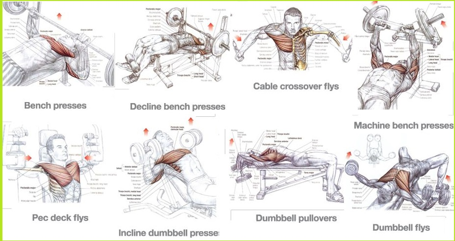 Best Chest Exercises for Mass - Training for Size - all ...