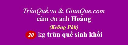 Trùn quế Krông Păk