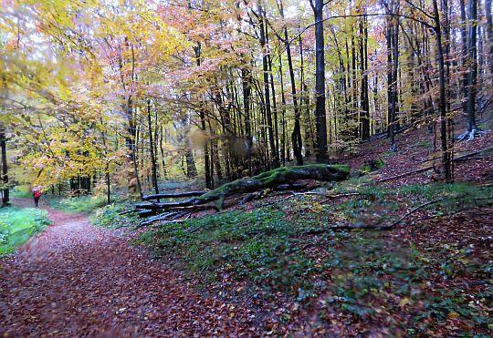 Wśród barw jesieni.