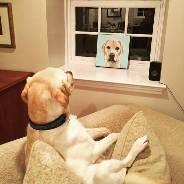 Cute dogs - part 127, funny dog pics, cute dog images, best dog photos