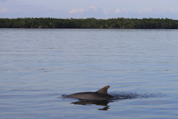 Everglades National Park Bottlenose Dolhin