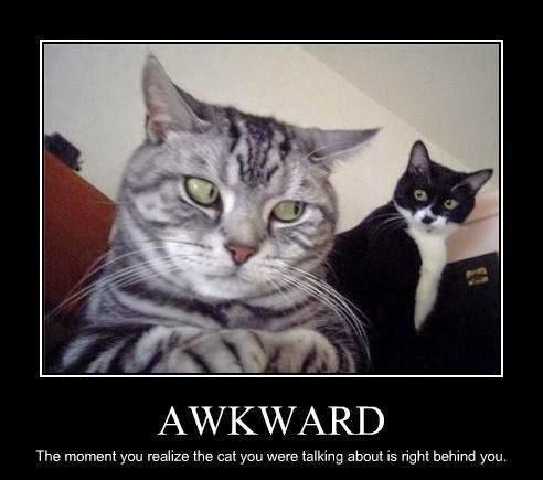 Funny Awkward Gossip Cat Joke Picture