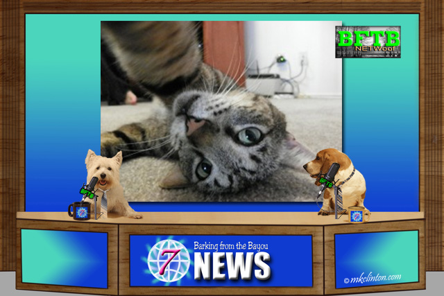 BFTB NETWoof News reporting on cat selfie app
