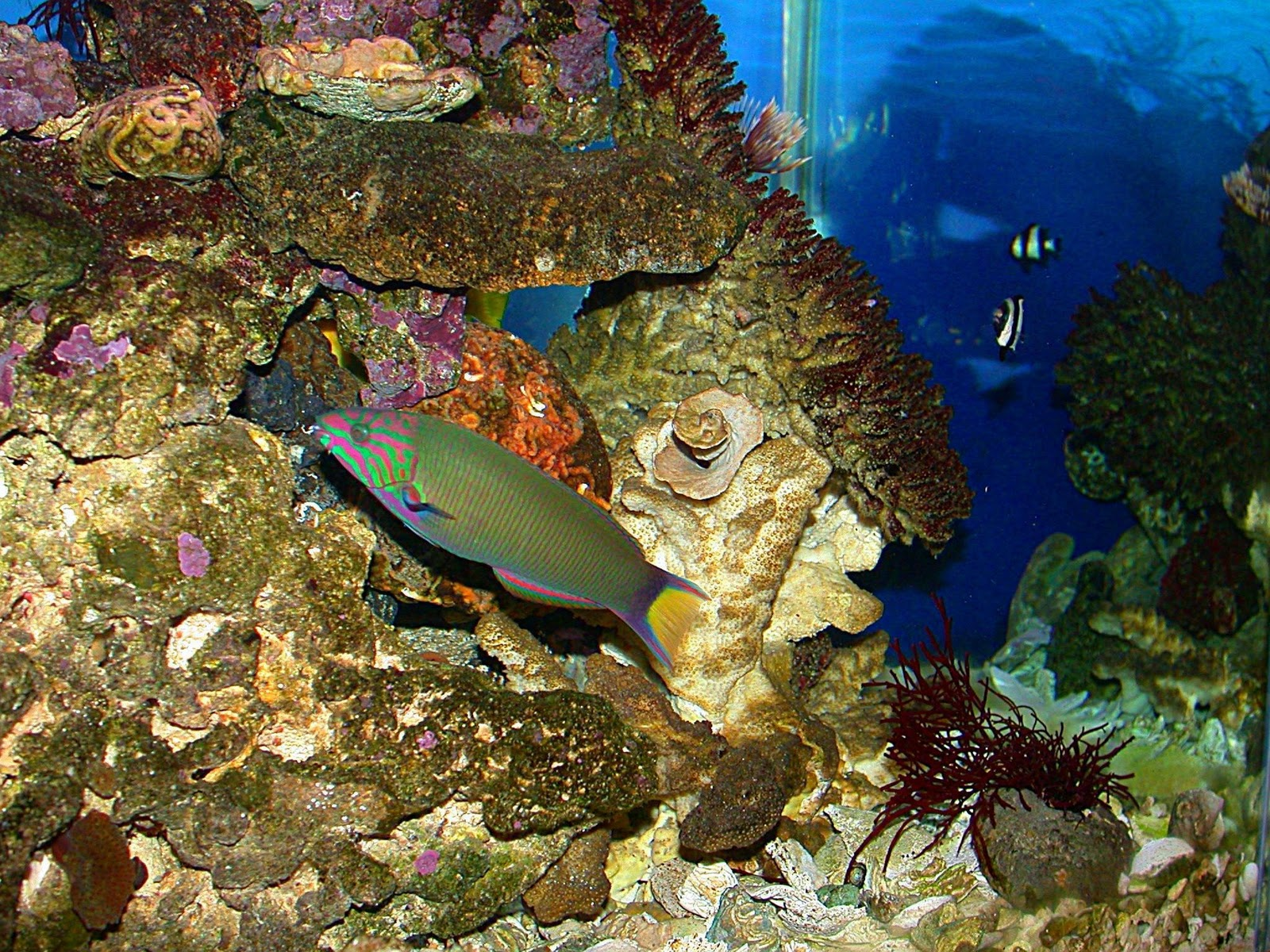 Fish Wallpapers,Fish Pictures,Fish Photos: Tropical Fish ...  Fish Wallpapers...