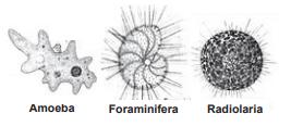 Materi SBMPTN Biologi Protista