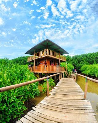 hutan mangrove, pantai ayah, pantai Logending, kebumen