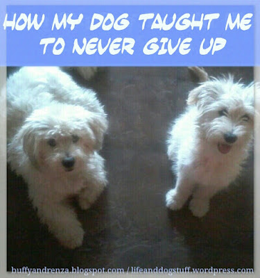 How My Dog Taught Me To Never Give Up