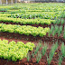 Prefeitura de Mairi firma convênio com Ministério do Meio Ambiente para implantação de hortas coletivas