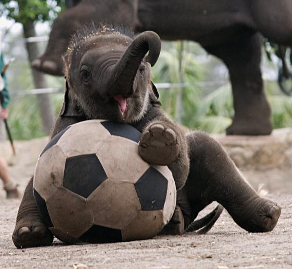 Elefantes tiernos imagenes y fotos imagenes frases - Fotos de elefantes bebes ...