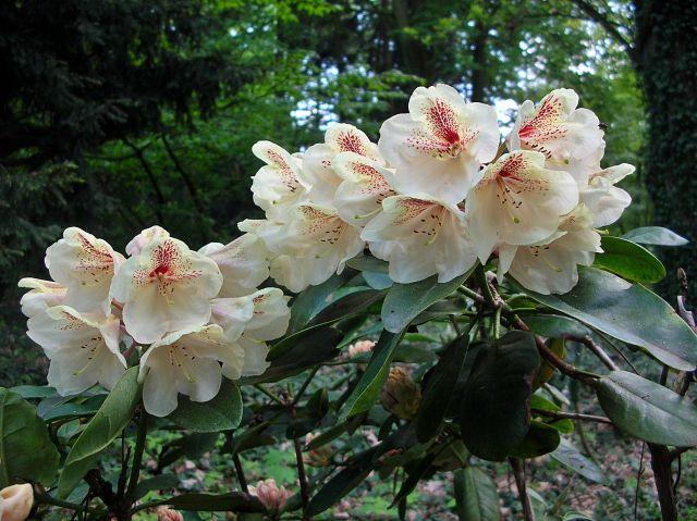 kwiaty, wiosna, Kórnik, Wielkopolska