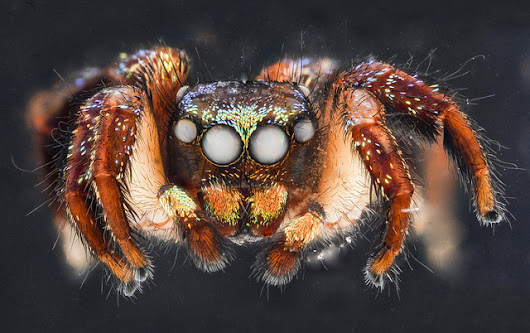 Our face spiders - friends or foes?