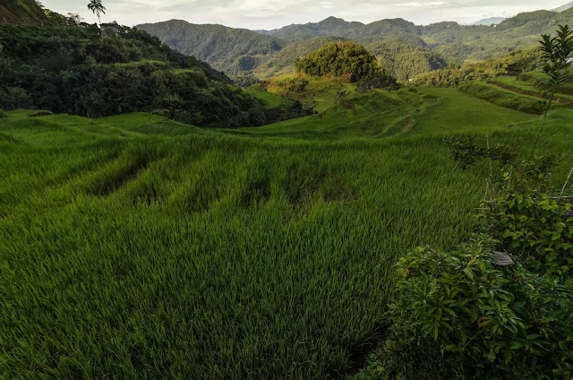 Rice Fields Banaue Bangaan Road Views Ifugao Cordillera Administrative Region Philippines