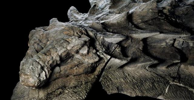 Απολίθωμα δεινοσαύρου διατηρήθηκε «σαν άγαλμα» για 110 εκατομμύρια χρόνια (βίντεο)