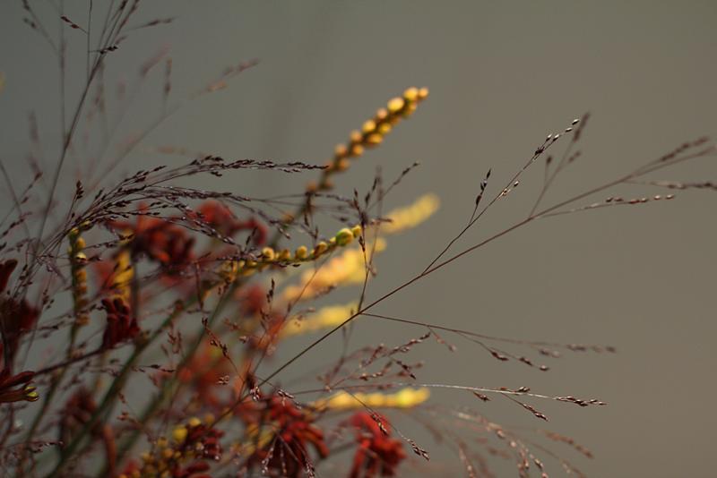 Anemonen kukkakimppu