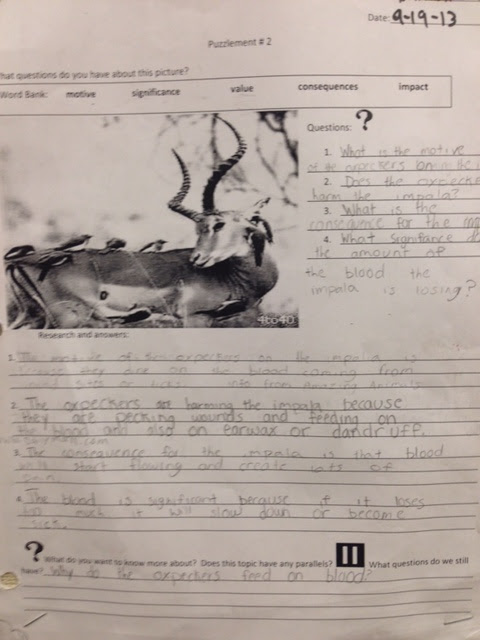 Students had to figure out what the relationship was between the oxpeckers and the impala.  How did this impact the impala?