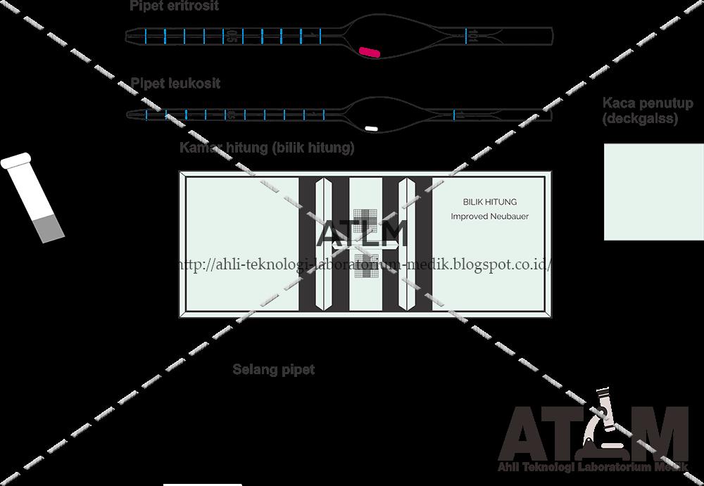 Mengenal hemocitometer atlm pipet tersebut harus memenuhi syarat ketelitian tertentu dan bilik hitung mempunyai sebuah garis grid berbentuk kotak kotak dengan ukuran tertentu ccuart Choice Image