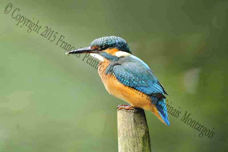 prenom oiseau femelle