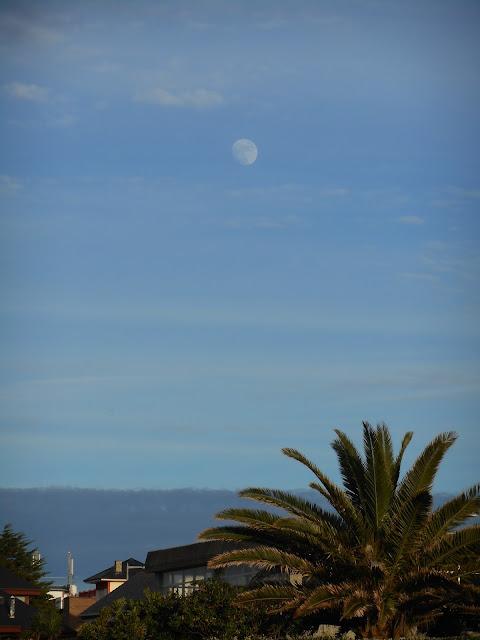 luna,moon