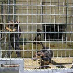 """Protectoras denuncian presunto tráfico """"ilegal"""" de animales en la perrera de Córdoba"""