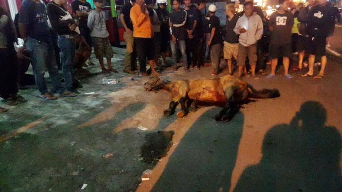 Kisah Kuda Ngamuk hingga Meninggal Gara-gara Klakson Bus