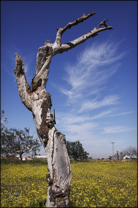 tronco,arbol,seco,fuente_alamo,paisaje,nubes,murcia,flores,arte