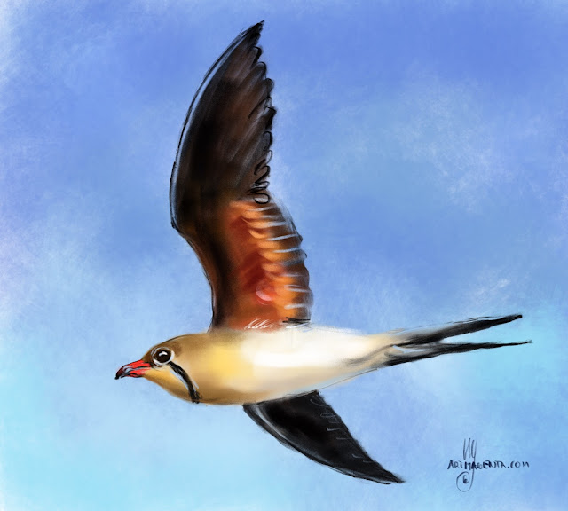 Collared pratincole bird painting by Artmagenta