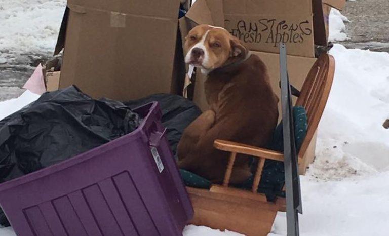 El perro abandonado que construyó su propio refugio con basura de la calle