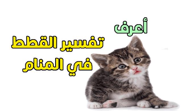 """رؤية القطة السوداء في المنام للمرأة العزباء , رؤية القط """"ذكر وانثي """" في المنام للرجال والنساء , عضة القط في المنام أو خربشة القط في المنام ,  بيع القط في المنام ,  أكل لحم القطط في المنام , التحول إلي قط في المنام , رؤيا ذبح القط في المنام ,رؤية القطة السوداء في المنام للمرأة العزباء"""