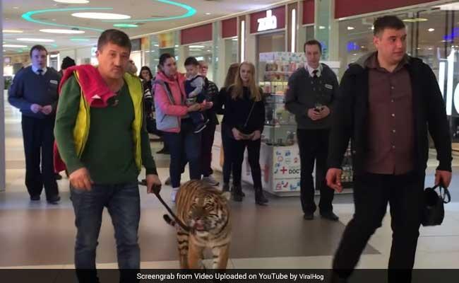 मॉल में बाघ को देख कुछ इधर भागने लगे तो कोई उधर, फिर जो हुआ उसे देखकर सभी थे Shocked