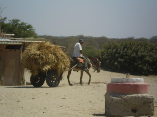 Donkey cart with hay