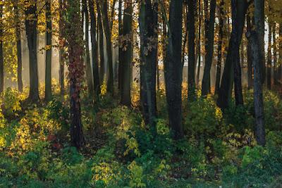 Glinianki las Sulejówek słońce jesienne