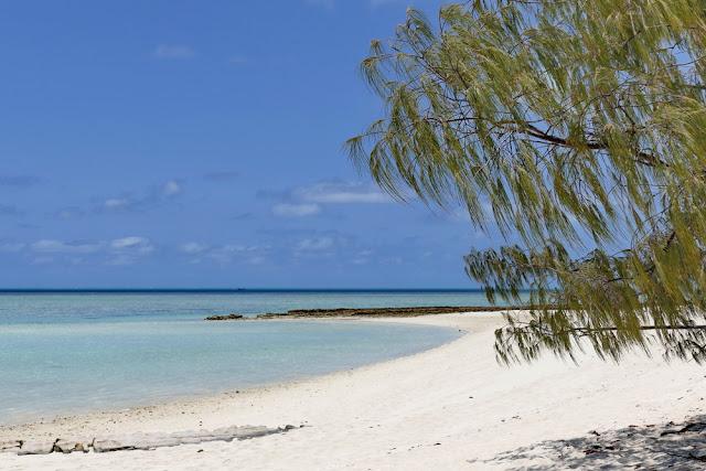 Heron Island Strand Beach Traumstrand Insel