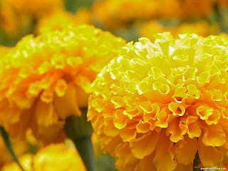 Imagenes de Amor, Flores Amarillas, parte 1